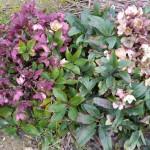in giardino 9