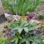 in giardino 10