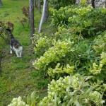 in giardino 1