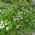 in giardino 3