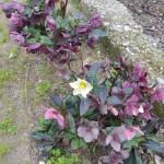 in giardino 6
